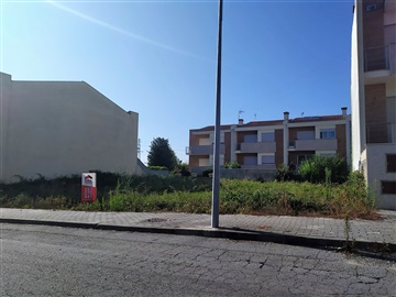 Lot / Braga, Dume
