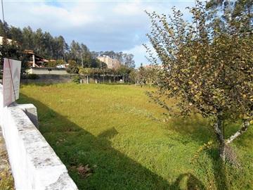 Lote / Santa Maria da Feira, Mozelos