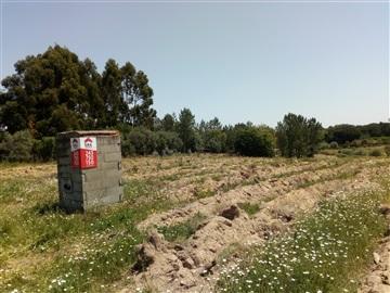 Terrain rural / Cartaxo, Pontével