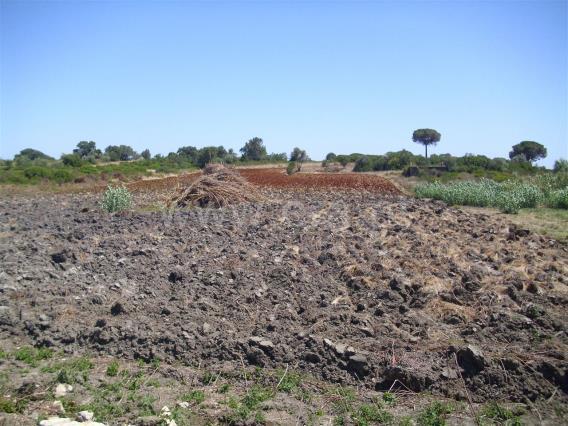Terrain rural / Cartaxo, Vale da Pinta