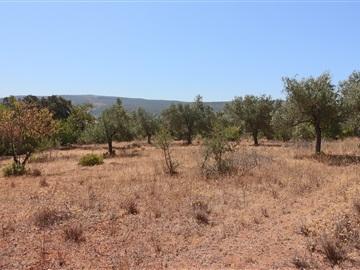 Terrain rural / Loulé, Querença, Tôr e Benafim