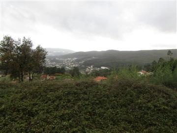 Terrain rural / Vale de Cambra, Macieira de Cambra