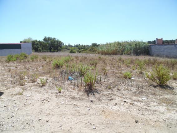 Terreno / Cantanhede, Cantanhede e Pocariça