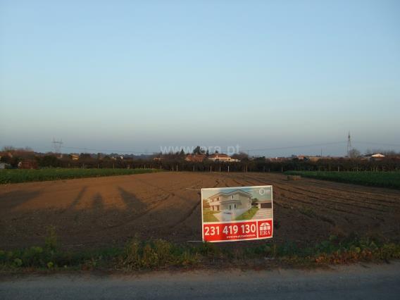 Terreno Para Construção / Cantanhede, Sepins e Bolho