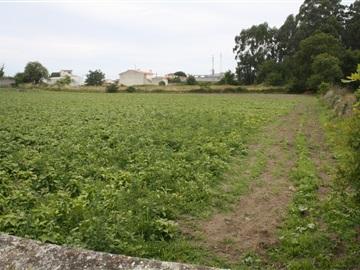 Terreno / Póvoa de Varzim, Argivai