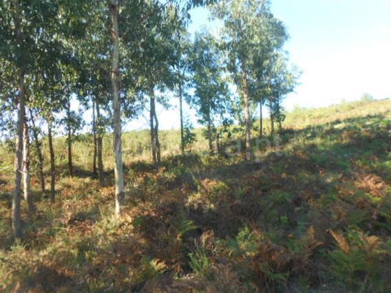 Terreno Rústico / Póvoa de Lanhoso, Calvos e Frades