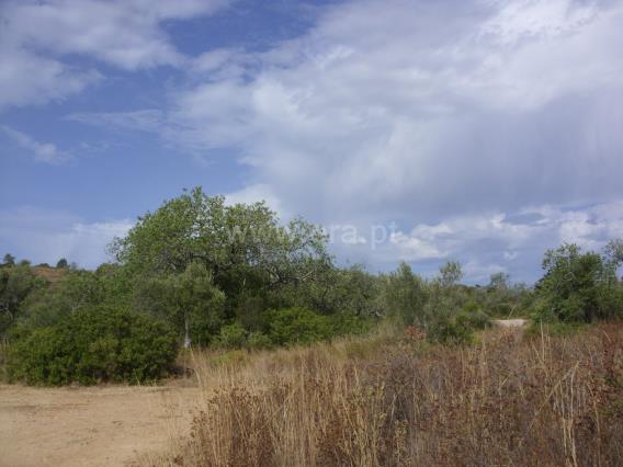 Terreno Rústico / Silves, Alcantarilha e Pêra