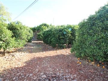 Terreno Rústico / Silves, Algoz