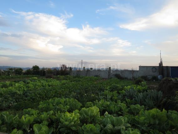 Terreno Rústico / Vila do Conde, Labruge